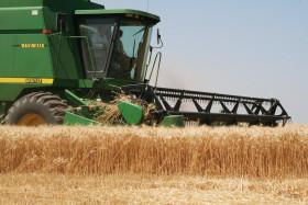 """Productores que quieran acceder al crédito """"para la inversión productiva"""" con una tasa del 30% deberán vender el 95% de su cosecha de trigo"""