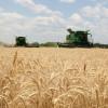 El gobierno argentino volvió a emitir permisos de exportación de trigo luego de un año y medio sin autorizar una sola tonelada
