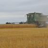 Argentina volvió a producir trigo: ahora necesita urgente una política triguera