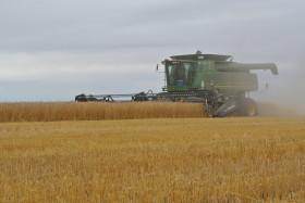 Fracasó la cosecha de trigo brasileña: este año habrá premios para los pacientes
