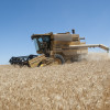 Los precios de los contratos futuros de trigo argentino comenzaron a incorporar el riesgo político
