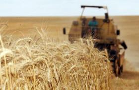 Primera señal del incendio: los precios del trigo en el estado brasileño de Paraná alcanzaron un récord histórico