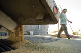 Acá sí que la suba no se frena con nada: el trigo de alta calidad llegó a 4750 $/tonelada para registrar un nuevo récord