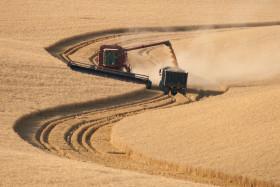 Perdimos por abandono: EE.UU. se quedó con el mercado brasileño de trigo gracias a la desidia argentina