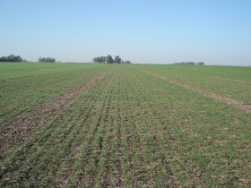 La cebada/soja de segunda es (por ahora) el cultivo más rentable del ciclo 2012/13