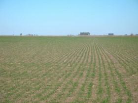 Sigue cerrada la exportación de trigo 2013/14 cuando faltan pocos días para el inicio de la siembra del cereal