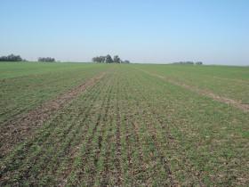 """Trigo 2013/14: un """"cultivo de cobertura"""" carísimo para campos con alquileres anuales"""