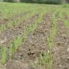 El trigo fue la mejor inversión del último año: registró una rentabilidad del 140%