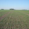 Otra campaña más sin alcanzar el potencial de área: el trigo sigue siendo inviable en el norte de la región pampeana