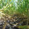 El nivel de coberturas en trigo 2014/15 cayó más de un 30%: un escenario apto sólo para productores con capacidad financiera