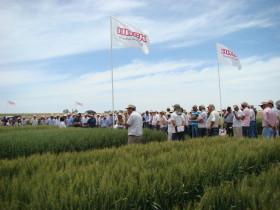 """Valió la pena el esfuerzo para mejorar la calidad del trigo: """"Un año atrás el piso de precios se ubicaba en torno a 140 u$s/tonelada"""""""