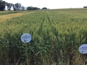 Herramientas para potenciar rendimientos en cultivos de invierno
