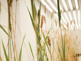 """Representantes de la cadena de valor cerealera advierten que la liberación del evento HB4 """"pone en riesgo las exportaciones de trigo y harina"""""""