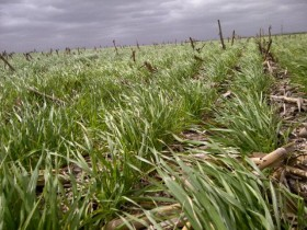 A no dormirse: los malos precios actuales del trigo 2014/15 pueden llegar a ser mucho peores en cosecha