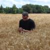 La restricción hídrica no fue en vano: en la zona norte de la región pampeana se detectaron muchas partidas de trigo con alta calidad