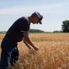 Se viene la carnicería: el precio del trigo para productores sin cobertura que deban vender en cosecha es de apenas 150 u$s/tonelada