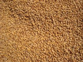Ranking semanal: ACA y Bunge concentraron los permisos de exportación de trigo 2012/13