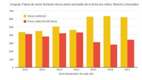En Uruguay también aumentó la faena de vacas lecheras por los bajos precios de leche