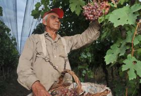 Los trabajadores agrarios temporarios podrán seguir recibiendo asignaciones familiares una vez finalizada la relación laboral
