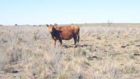 Viva la Vaca: comenzaron a reactivarse los precios de exportación de los cortes bovinos enviados a China