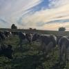 El desastre lechero también se refleja en las góndolas: en lo que va del año los precios de los lácteos subieron 18,5%