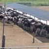 """Cumplió diez meses el """"subsidio maicero"""" para tambos: seguirá vigente en los próximos meses aún con una baja del precio de la leche"""