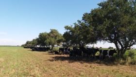 Se licuaron las exportaciones argentinas de leche en polvo por la baja disponibilidad de materia prima