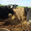 En agosto el precio relativo de la leche comienza a salir del pozo: igual no alcanza para la mayor parte de los tamberos