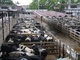 Se acabó el tiempo para el sector lechero: el gobierno macrista deberá decidir si salva de la quiebra (o no) a la mayor parte de los tambos