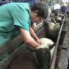 Extendieron hasta el 1 de julio el plazo de inscripción para veterinarios que trabajen en programas sanitarios del Senasa