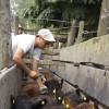Bacterias resistentes: Argentina prohíbe el uso de colistina en animales para preservar la eficacia de su uso en humanos