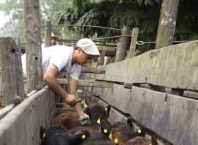 Extendieron hasta el 1 de octubre el plazo de inscripción para veterinarios que trabajen en programas sanitarios del Senasa
