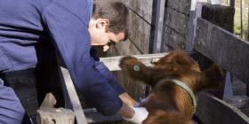 El Senasa recordó que el 1 de octubre vence el plazo para reacreditarse en programas de sanidad animal
