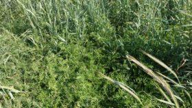 Sostenibilidad: se duplicó la proporción de superficie con cultivos de servicio