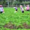 """El gobierno chino designa al desarrollo rural como objetivo político """"número uno"""" para """"incrementar el área de siembra de soja"""""""
