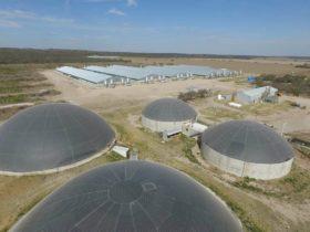 """Inversiones chinas en el sector porcino argentino: """"Pensamos que esas granjas se instalen fundamentalmente en el NOA y NEA"""""""