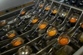 Se estancaron las exportaciones argentinas de ovoproductos a pesar de los buenos precios internacionales
