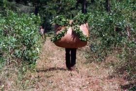 Paritarias rurales: el ajuste anual por inflación para los productores de yerba se determinó en 33%