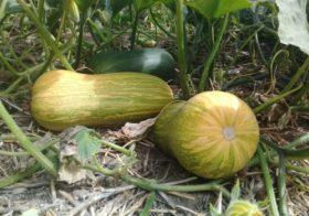 Crearon el Programa Nacional de Buenas Prácticas Agrícolas Sustentables en Productos Frutihortícolas