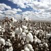 El gobierno implementó nuevos reintegros para productos agroindustriales de economías regionales
