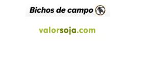 Por más y mejor periodismo agropecuario, se fusionan Bichos de Campo y Valorsoja