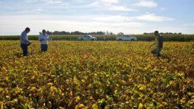 """Récord de pantentamientos de camionetas agropecuarias: las empresas se preparan para afrontar una """"guerra comercial"""""""