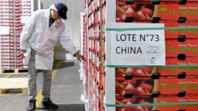 Chile cierra el año 2019 con un nuevo récord histórico en exportaciones de cerezas gracias a la demanda china: 1562 M/u$s