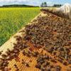 Diputado del PRO pide prohibir tres insecticidas neonicotinoides al considerar que se trata de productos perjudiciales para las abejas