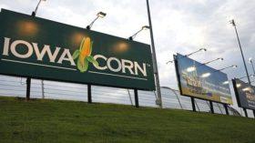 Operadores especulativos no ven ninguna señal para revertir apuestas bajistas en el maíz