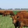 Solicitaron la posibilidad de incluir en el capítulo argentino del nuevo informe del Panel de Cambio Climático un apartado sobre el efecto compensador de las pasturas en ganadería