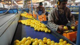 Reglamentaron la emergencia para la cadena citrícola: cuáles son los beneficios contemplados