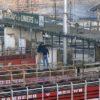Los frigoríficos que exportan carne a China ya no podrán comprar más hacienda proveniente de remates ferias y mercados concentradores