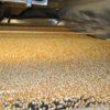 Alivio: se desbloquean las exportaciones argentinas de especialidades agrícolas con el nuevo plazo máximo de 180 días para liquidar divisas