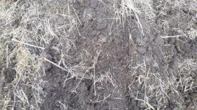 Declararon la emergencia agropecuaria por sequía para La Pampa